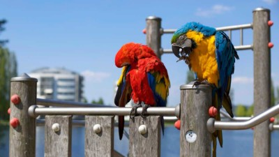 Lista popularnych papug