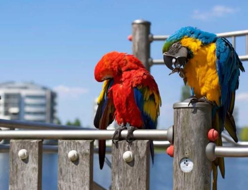 Popularne papugi do hodowli domowej – lista